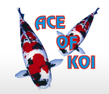 Ace of Koi Limited